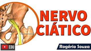 Recuperação femoral da de cronograma nervo lesão do