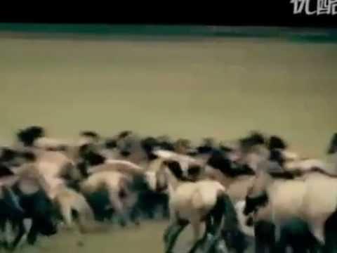 Vó Ngựa Thảo Nguyên - Nhạc Hoa - Đang cập nhật