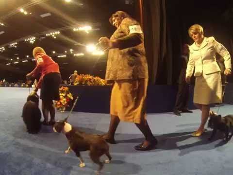The National Dog Show (2016) - Nonsporting Dogs Preview