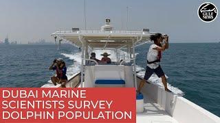 Dubai marine scientists and researchers survey dolphin population | UAE news