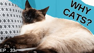 5 reasons to adopt a Siamese cat