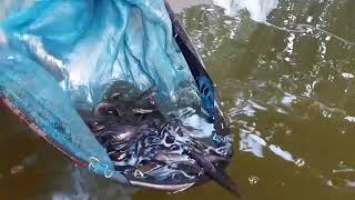 Biofloc fish farming in west bengal - Youtube Video Download