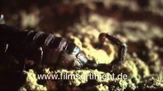 Schulfilm: WAS IST WAS - WÜSTEN (DVD / Vorschau)