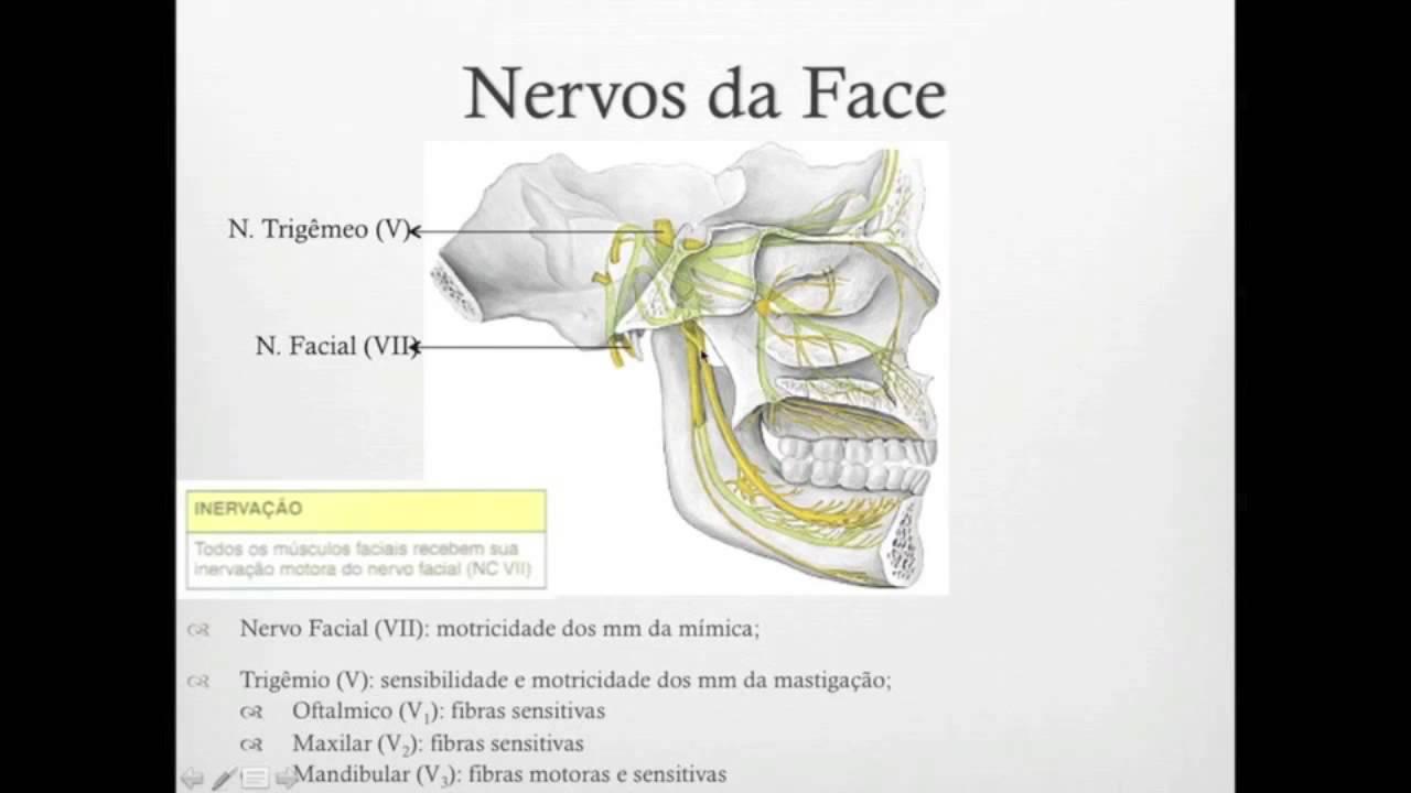 Anatomia Humana Módulo 4 Cabeça E Pescoço