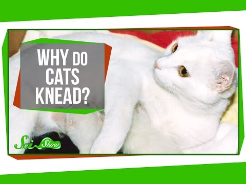 Why Your Cat Is Always Kneading