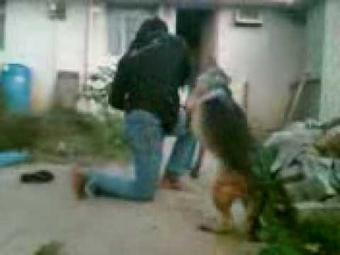 my self training my dog 6 (hemanth bangalore)