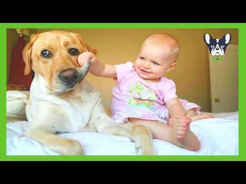 Cute Dogs and Adorable Babies Compilation (2018)