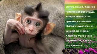 ТОП животных , которые рождены стать моделями