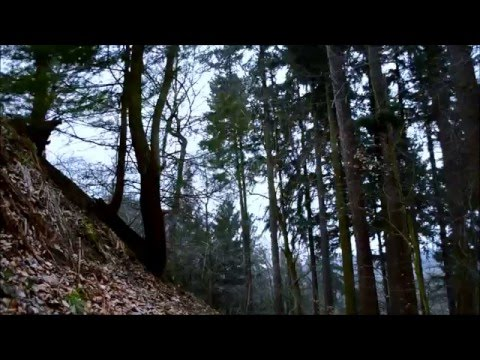 2 HOURS – Windy Woods (Sleepy Forest Sounds, White Noise, ASMR)