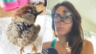 This rescued sparrow is convinced he's a dog
