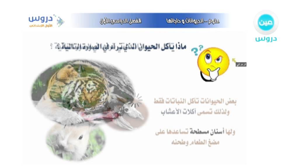 الأول الإبتدائي الفصل الدراسي الأول علوم الحيوانات وحاجاتها آكلات أعشاب ولحوم Youtube