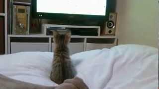 おもしろ猫動画 vol.1 超かわいい☆【日本一サッカー好きの猫】 日本代表...