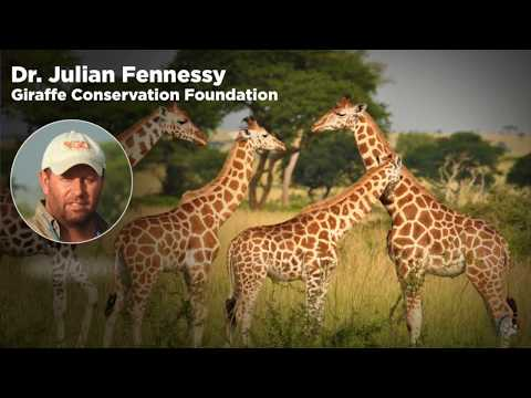WCN Fall Expo 2017 - Giraffe Conservation Foundation- Dr.Julian Fennessy