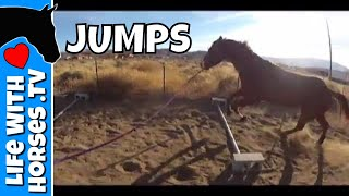 Horse Lunging over Jumps- Lenee & Romeo