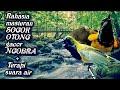 Rahasia Masteran Sogok Otong Gacor Ngobra Terapi Suara Air Pikatan(.mp3 .mp4) Mp3 - Mp4 Download
