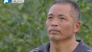 河南电视台武术世界频道【少林南院功夫】之《隐士出山》