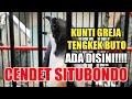 Mewahnya Cendet Situbondo Tembakan Kuntilanak Greja Tengkek Buto  Mp3 - Mp4 Download