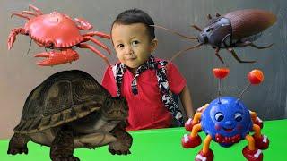Download Mainan Kecoa, Laba-Laba, Kura-kura dan Kepiting - Belajar Warna & Berhitung - Animal Toys