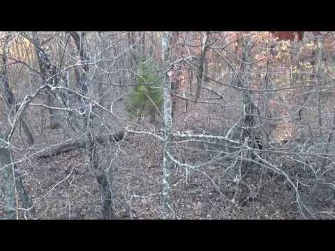Recurve Bow Harvest: Rogers Co.