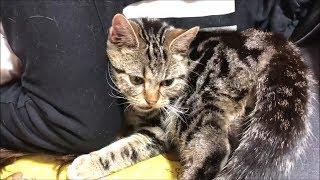 ガチ寝する妹にベッタリくっついてしまった子猫w thumbnail
