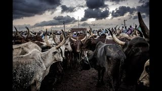 Nigerians rule on what FG should do with RUGA money