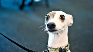 Funny Dogs Reaction To Magic Tricks! Try Not To Laugh!