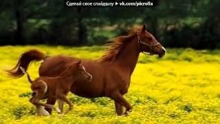 «Разные фото лошадей» под музыку ♥ Восточная музыка♥    Турецкая  Picrolla