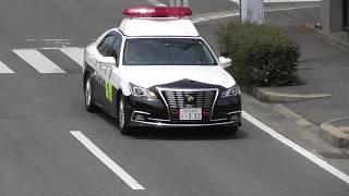 愛知県警 春日井警察署 210系クラウン白黒パトカー