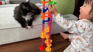 娘がいないと退屈で不貞腐れる猫 ラガマフィン A cat that gets bored and flirted without a daughter