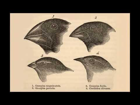 Peppered Moths and Galapagos Finches