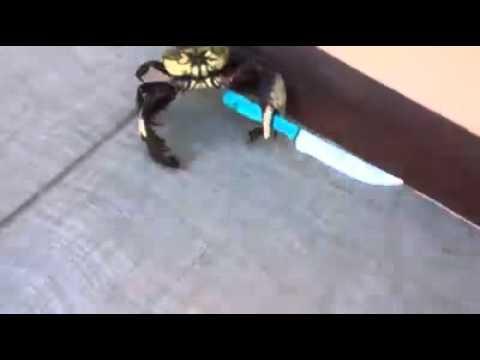 Crab to star trek fight music