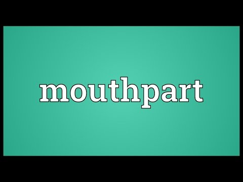 Header of mouthpart