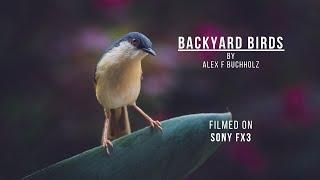 Birds   Backyard Wildlife in Gurgaon   Wildlife Film by Alex F Buchholz