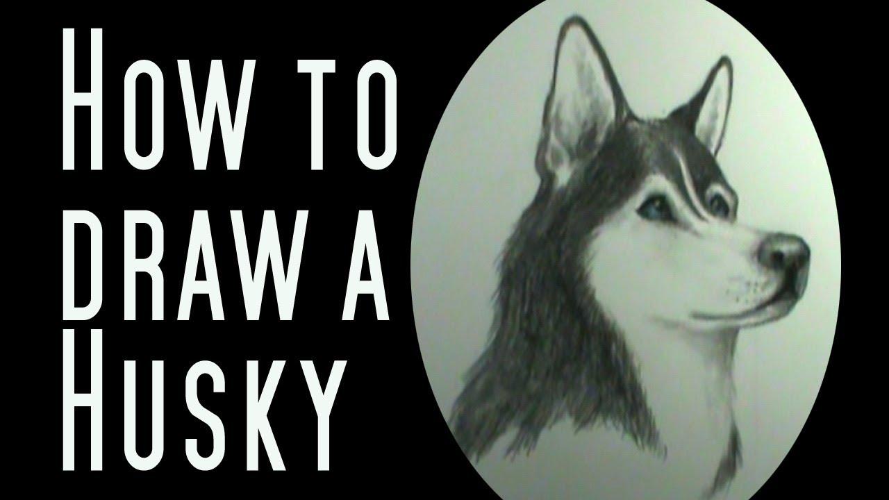 How To Draw A Husky