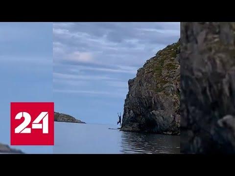 Отчаянный прыжок лося со скалы сняли на видео - Россия 24