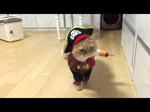 Viral Video UK: Pirate Cat!