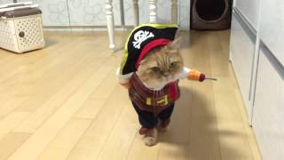 Viral Video UK: Pirate Cat!
