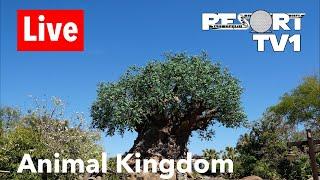 🔴Live: Disney's Animal Kingdom Live Stream - 7-6-18