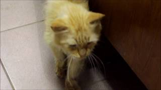 Бездомные животные: котик Апельсин (истории спасения кошек)