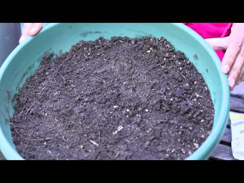 How Do I Germinate Sunflower Seeds? : Planting the Seed