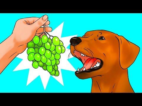 Warum Hunde keine Trauben essen können und 53 weitere unglaubliche Fakten