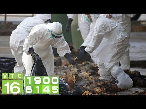 Điêu đứng Vì Thảm Họa Viêm Phổi Cấp, Trung Quốc Dính Thêm Cúm H5N1 | VTC16