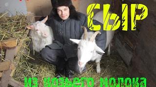 готовим домашний  сыр из козьего молока козий сыр домашний своими руками Мысли вслух 2.0