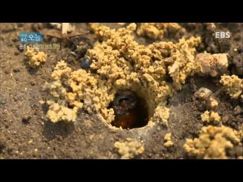 다큐 오늘 - 곤충,그들만의 생존경쟁