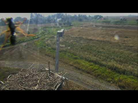 Osprey Nest - Charlo Montana Cam 09-12-2017 09:19:33 - 10:19:33