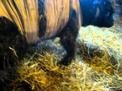 Calf Rehab Progress - YouTube