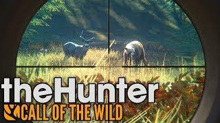 MULAKI I NIEDŹWIEDZIE - theHunter: call of the wild #3