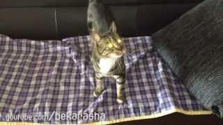Кот и молодая фасоль, лучшие друзья