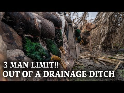 Limit Of Mallards | Duck Hunting Rivers