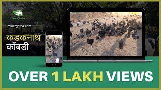 कडकनाथ कोंबडी पालन Kadaknath Kombdi Palan - Swapnil waghmare, Dr Shailesh Madane